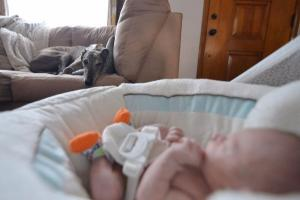 ADORABLE greyhound who never knew love falls head-over-heels for baby brother
