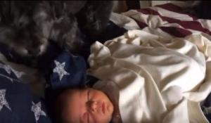 Mans best friend: Adorable video shows family pet tucking baby in